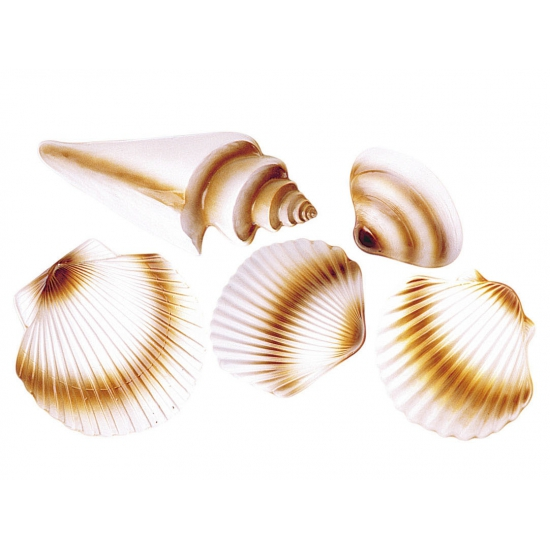 Zeeschelpen decoratie