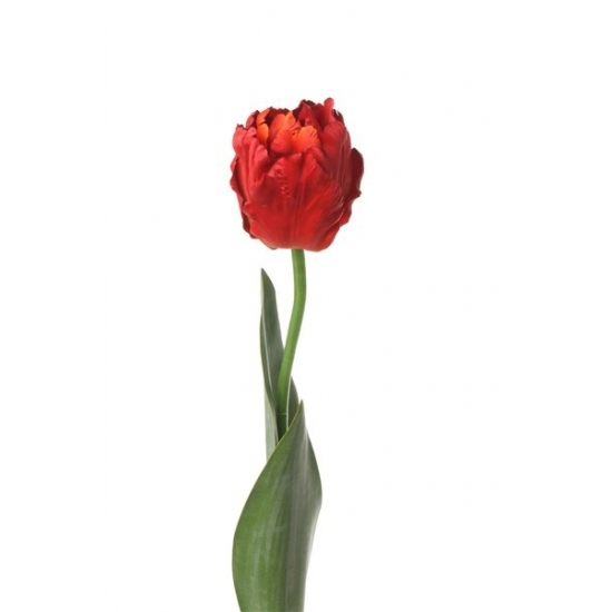 /thema-feestartikelen/sinterklaas/surprises-materiaal/decoratie-materiaal/kunstbloemen--planten/kunstbloemen/alle-kleuren-soorten-kunstbloemen